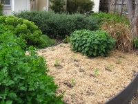elsternwick-raised-veggie-bed