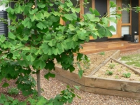 Brunswick East Rear Vegetable Garden