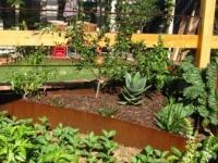 Brunswick East garden 5 AFTER design