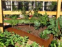 Brunswick East garden 6 AFTER design
