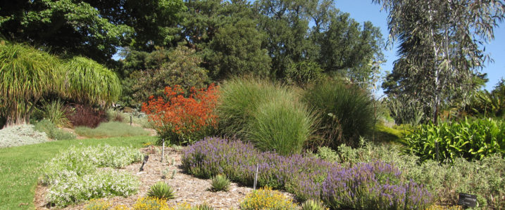 Royal Botanic Gardens Water Conservation Garden